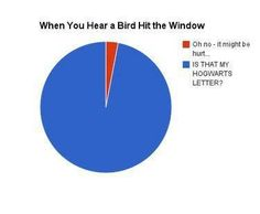 Honestly, even tho I am a harry potter fan, when a bird hits the widow I just wish it'd stop and keep quiet Harry Potter Jokes, Harry Potter Fandom, Hogwarts Letter, Fandoms, Voldemort, Mischief Managed, 5sos, The Book, Nerdy