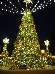 walk the 5 million twinkling lights at busch gardens christmas town celebrate centuries old traditions at colonial williamsburg and visit santa at yankee