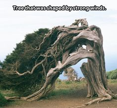 Be like this tree, willing to bend yet refuse to break. Grow and flourish despite life's challenges.