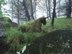An old tree stump with grass growing over it looking like a mystic creature; Faroe Islands