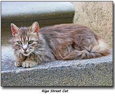 #Riga Street Cat  Like,Repin,Share, Thanks!