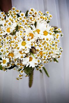 I love the idea of you girls holding a chamomile and daisy bouquet! So sweet and pretty!