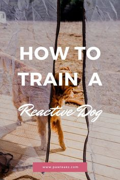 Easy Tips To Leash Train Your… #dogtrainer Dog Training Classes, Dog Training Techniques, Leash Training, Crate Training, Dog Training Tips, Potty Training, Training Pads, Agility Training, Toilet Training