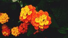 colorful by Mirjana Nik on 500px