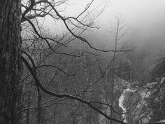 Upper Falls White Oak