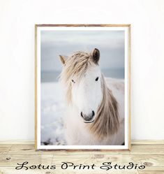 Horse Print, Icelandic Horse Photo, Nursery Animal Wall Art, Photography, Printable Download, Horse Photo, Large Art Poster, #229