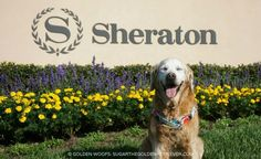 dog friendly Sheraton Carlsbad