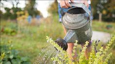 Fedezzük fel a keserűsó áldásos hatását a kertben   Sokszínű vidék