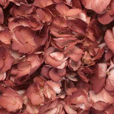 FiftyFlowers.com - Terra Cotta Airbrushed Hydrangea