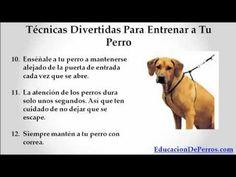▶ Como entrenar a un perro (Técninas Infalibles) - YouTube