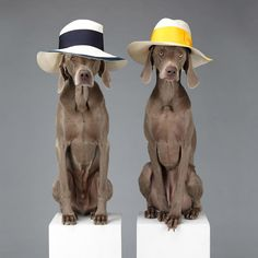"""""""We are gonna go on a walk, see..."""" """"I can't see, this hat is covering my eyes, wise guy."""" #welovedogs"""