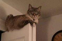 28 Gatos que no se moverán por ti