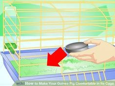 Image titled Make Your Guinea Pig Comfortable in Its Cage Step 8