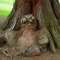 A goblin-tree baby. A goblin-tree baby. Creepy Pictures, Face Pictures, Weird Trees, Twisted Tree, Tree People, Tree Faces, In Natura, Tree Carving, Old Trees