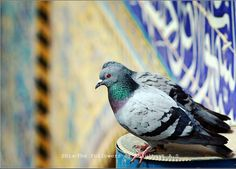 """""""We lived like two pigeons in a cocoon.""""  — Imam Ali (ع) about Fatima az-Zahra (س)"""