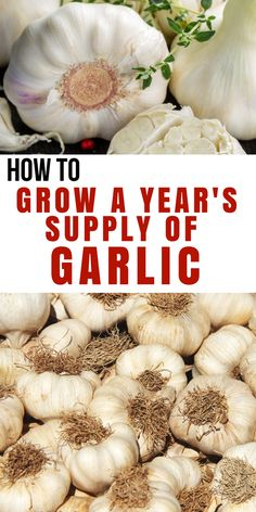 How to Grow a Year's supply of garlic