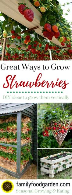 Best Ways to Grow Strawberries in Containers [year] Best Ways to Grow Strawberries in Containers [year],Garten und Pflanze So many ways to grow strawberries! Growing strawberries in containers, strawberry planters & strawberry pots is. Veg Garden, Garden Types, Fruit Garden, Garden Care, Edible Garden, Vegetable Gardening, Veggie Gardens, Easy Garden, Garden Ideas Diy