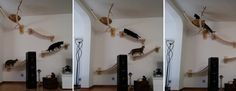 Katzenmöbel aus Deutschland, hochwertige Schreinerarbeit für ein katzengerechtes Leben in der Wohnung. Von Tierärzten empfohlen. Fördert den natürlichen Bewegungsdrang ihrer Katze. Unterstützt die artgerechte Haltung von Katzen in der Wohnung. Sorgt für Ruheplätze zum Wohlfühlen So besonders, wie jede Katze ist, so besonders sollte ihr Umfeld sein. Mit unserem Goldtatzensortiment tragen wir dem Rechnung. Wir beleben Ihr Katzenzimmer mit luxuriösen und doch natürlich-katzengerechten…