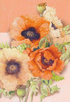 Poppies   by Marjolein Bastin