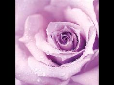 Photo about Abstract purple wet rose background, beautiful macro flower with morning dew. Image of background, decoration, bloom - 19841055 Beautiful Rose Flowers, Lilac Flowers, Purple Roses, Lavender Roses, Pastel Purple, Dark Purple, Light Purple, Pale Pink, Large Metal Wall Art