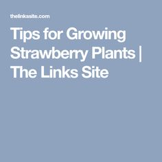 Tips for Growing Strawberry Plants | The Links Site