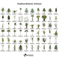Prehistoric Plants Alive Today Archaeopteris Prehisto...