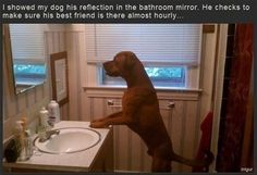 I showed my dog his reflection...