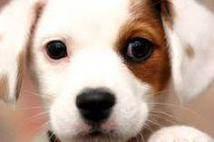 Risultati immagini per i cani