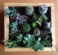 box o' succulents
