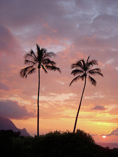 ✮ Tropical Dream