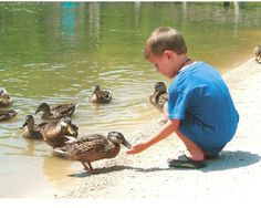 The Deanna Rose Children's Farmstead opens April 1 for the season. Come and feed the ducks with us! http://www.opkansas.org/things-to-see-and-do/deanna-rose-childrens-farmstead/
