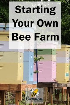 How to Start a Bee Farm Consider starting your own Bee Farm. A small farm can produce honey and hive products to sell. Honey bees can be a viable part of your homestead. How To Start Beekeeping, Beekeeping For Beginners, The Simple Life, Starting A Farm, Farm Layout, Farm Plans, Backyard Beekeeping, Future Farms, Bee Friendly