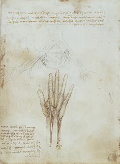 The nerves and arteries of the hand, and the pelvic Leonardo da Vinci (Vinci 1452-Amboise 1519) #TuscanyAgriturismoGiratola