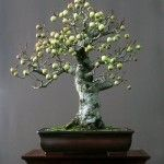 Bonsai Fruit Tree, Mini Bonsai, Bonsai Art, Fruit Trees, Shapes, Instagram Posts, Ikebana, Inspiration, Beautiful