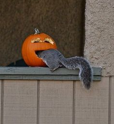They warned poor old Nutkin not to tease the jack o' lantern...