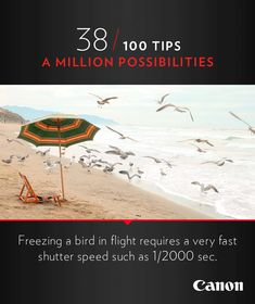 Canon Tip 38/100: Freezing a bird in flight requires a very fast shutter speed such as 1/2000 sec. More photography ideas and cinemagraphs at http://explore-lenses.usa.canon.com/inspire-me/tip38