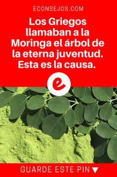 Moringa beneficios | Los Griegos llamaban a la Moringa el árbol de la eterna juventud. Esta es la causa.  | Los Griegos llamaban a la Moringa el árbol de la eterna juventud. Esta es la causa.