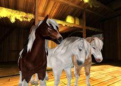 Three new colours of Icelandic horse!
