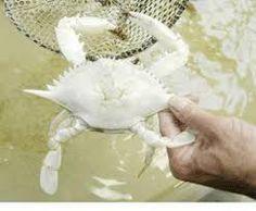 albino animals - Google Search