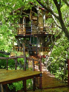 35 Amazing and Exotic Tree house Ideas. Imagine waking up from sleeping with clean air, the sound of birds chirping, and the fresh scent of trees. Lets explore unique tree house around the . Treehouse Hotel, Bamboo Architecture, Interior Architecture, Cool Tree Houses, Tree House Designs, In The Tree, Play Houses, Future House, Decks