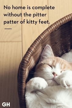 Catch Cat Quotes Sum Up Cats Purr-fectly - World's largest collection of cat memes and other animals Cute Cat Quotes, Cat Qoutes, Pet Quotes Cat, Quotes Quotes, Cat Anime, Beautiful Cats, Pretty Cats, Cat Memes, Crazy Cats