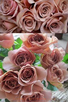 Gardening Roses Scented Cafe Latte roses 010 - The rose Cafe Latte is a brownish scented rose Blush Wedding Flowers, Bridal Flowers, Rose Wedding, Floral Wedding, Pink Roses, Pink Flowers, Rose Flower Colors, Lavender Roses, Tea Roses