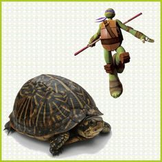 Turtle Fact: They Make Sounds, Even Though They Lack Vocal Cords.  Turtles can make sounds by swallowing or by forcing air out of their lungs, and some species emit unique noises.   #TMNT #NinjaTurtles #TeenageMutantNinjaTurtles #Turtles