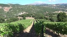 Its in Greek but interesting to watch. many vineyards like this in Greece will gladly show you their estate and cellar and often offer discount wines. Just another reason why you should come to Greece!