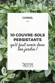 10 persistent ground cover that you have to have in your garden! Green Garden, Shade Garden, Garden Art, Garden Plants, Herb Gardening, Garden Painting, Indoor Greenhouse, Ground Covering, Permaculture Design