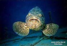 os peixes mais lindos do mundo ile ilgili görsel sonucu Merida, Creatures, Fish, Animals, Ocean, Tattoos, Animal Pictures, Animal Pics, Antique Toys