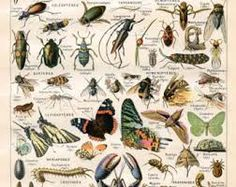 antique butterfly collection - Google Search