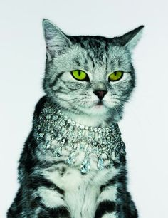 British Vogue cat jewelry by Jenny van Sommers