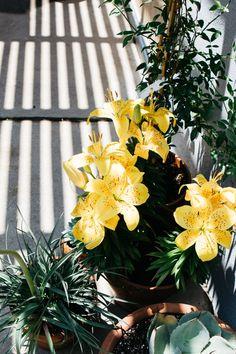 photo via www.thefreespirited.co