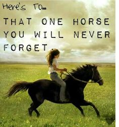 there are many horses you will never forget